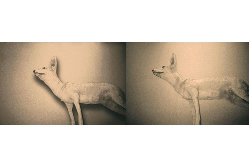 Wild Window (# 44-45) - 2013