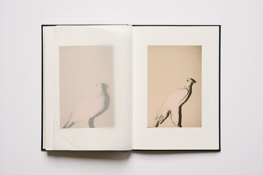 Wild Window artist book - 2013